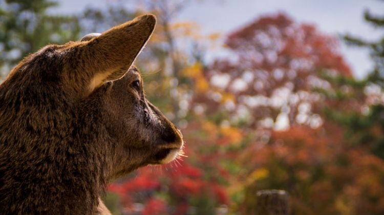 Deer spotting in Nara, relaxing in a Love Hotel in Osaka