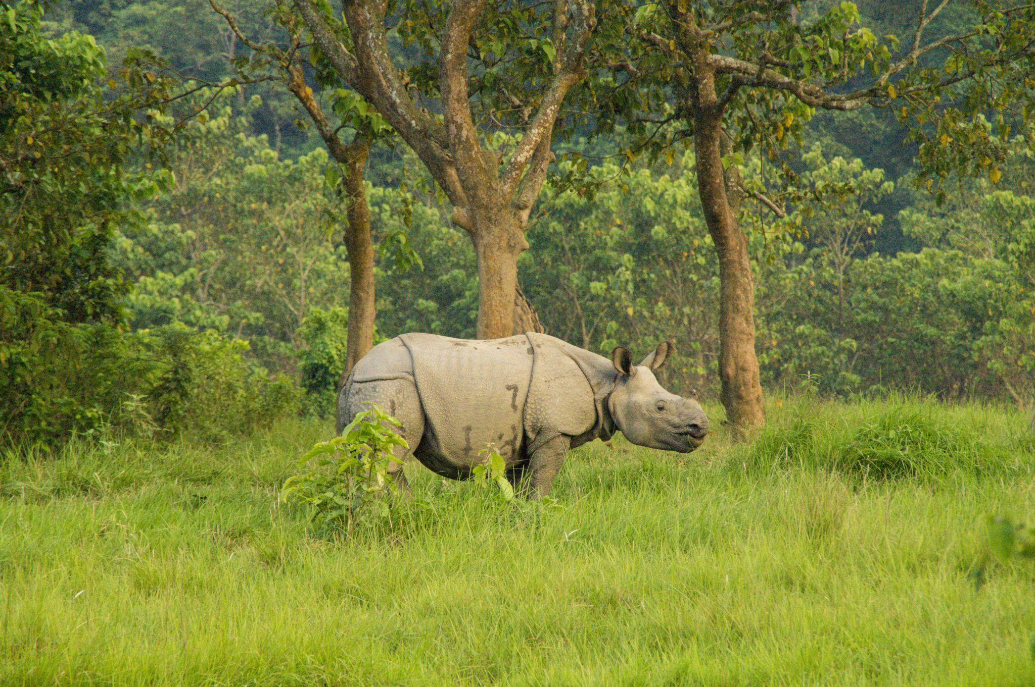 Chitwan National Park Nepal; watching rhinos and elephants