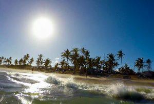 salvador beach palm trees