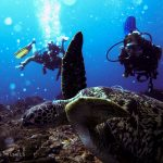 Hawksbill_turtle_deep_sharkpoint_Gili_T_diving