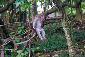 Monkey Forest Ubud Bali Indonesia