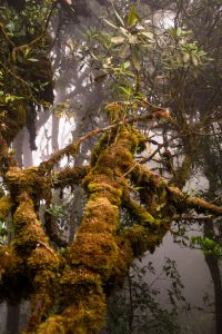 Cameron Highlands_mossy_forest
