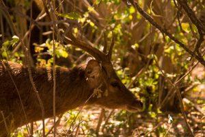 deer_island_bali