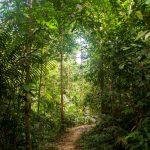 Malaysia's nature; Taman Negara National Park