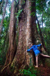 Koh Kood 300 year old Makka tree