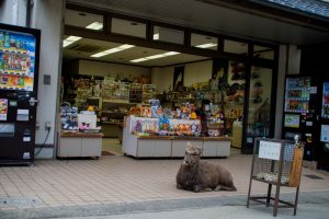 Nara Japan deer in front of shop