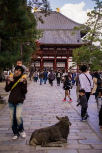 Nara Japan male deer in front of temple