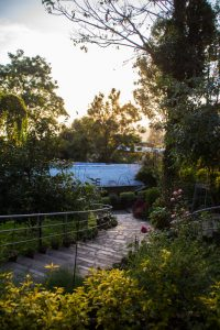 the Vipassana center has rustic gardens