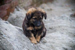 Bakthapur Nepal street puppy