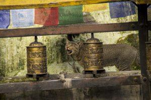 Namo Buddha Monastery prayer wheels