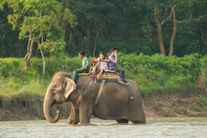 Chitwan Nepal stop elephant back riding