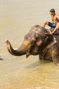 Chitwan Nepal stop bathing elephants