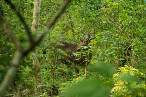Chitwan Nepal jeep safari spotted a deer